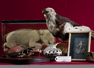 Exponate aus der Schatzkammer von Herzog Carl I. von Braunschweig und Lüneburg. Foto: Naturhistorisches Museum