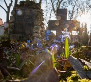 Petri-Friedhof. Foto: Peter Sierigk