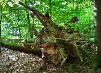 Auf Flächen der Stiftung Braunschweigischer Kulturbesitz sollen Urwälder entstehen. Foto: Stiftung Braunschweigischer Kulturbesitz.