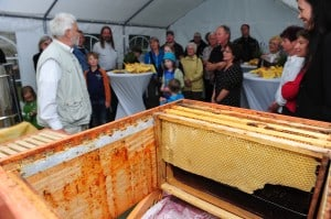 Imker Hans-Georg Picker zeigt das Innenleben des Bienenhauses. Foto: Andreas Greiner-Napp