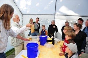 Imker Hans-Georg Picker präsentiert einen vollen Rahmen. Beim Schauschleudern wurden gestern sechs Kilogramm Honig geernet. Foto: Andreas Greiner-Napp