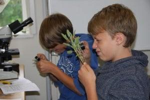 Schüler nehmen besondere Pflanzenarten im Flößerhaus unter die Lupe. Foto: TU