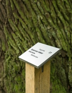 Eine neue Beschilderung der Bäume trägt zur Steigerung der Attraktivität bei. Foto: Peter Sierigk