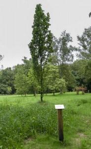Die Schilder weisen eindeutig auf die Baumarten hin. Hier das Beispiel einer Wintergrünen Eiche. Foto: Peter Sierigk