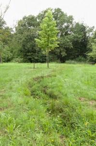 Ein Grabensystem trägt zur Entwässerung des Arboretums bei. Foto: Peter Sierigk