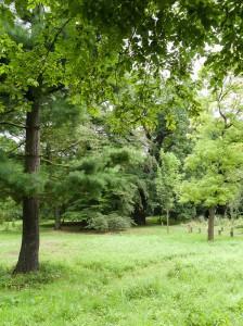 Blick in die parkähnliche Anlage. Im Hintergrund steht eine Eiche aus den Anfängen des Arboretums 1838. Peter Sierigk