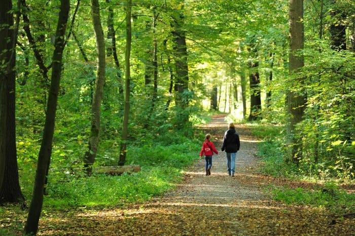 Erholsam: Spaziergang durch den Wald. Foto: Andreas Greiner-Napp