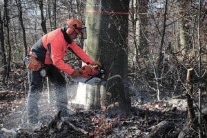 Forstwirtschaft ist eine Einnahmequelle für die SBK. Foto: Andreas Greiner-Napp