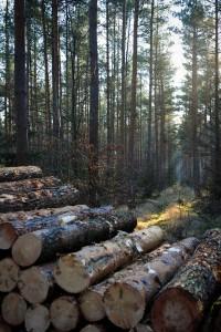 Die SBK verkauft Holz. Foto: Andreas Greiner-Napp