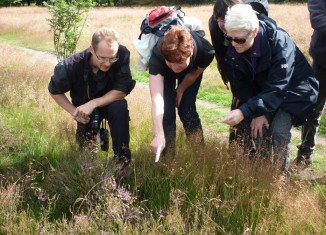 Bei den Exkursionen gibt es jede Menge Natur zu entdecken. Foto: Braunschweigische Landschaft