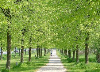 Allee entlang des Madamenwegs. Foto: Braunschweigische Landschaft