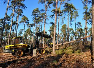Harvester bei der Holzernte. Foto: SBK / Andres Greiner-Napp