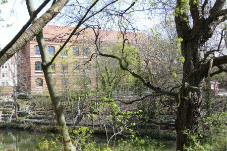 Das Wilhelm-Gymnasium vom Löwenwall aus fotografiert. Foto: Der Löwe