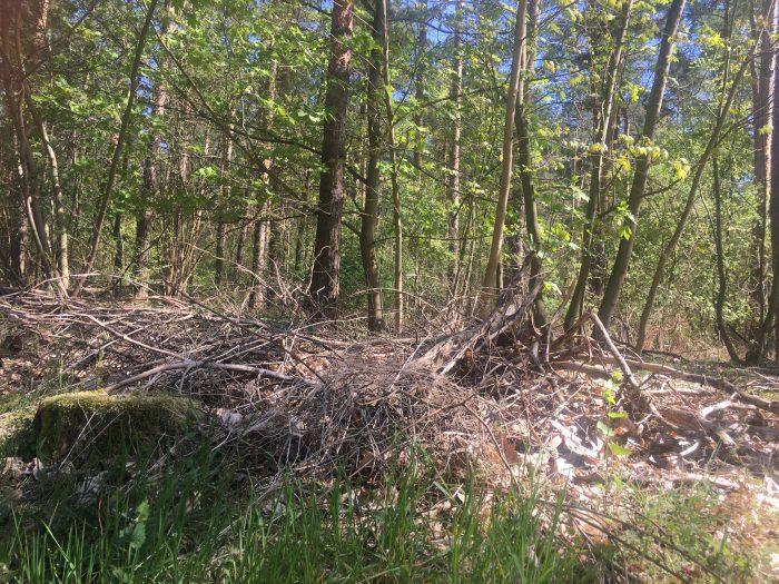 Totholz im Querumer Forst. Foto: Der Löwe