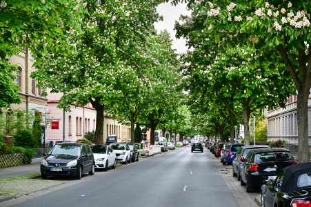 Kastanienallee, stadteinwärts. Foto: Andreas Greiner-Napp