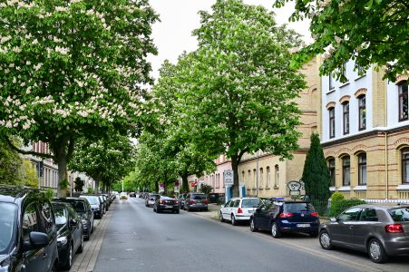 Kastanienallee, stadtauswärts. Foto: Andreas Greiner-Napp