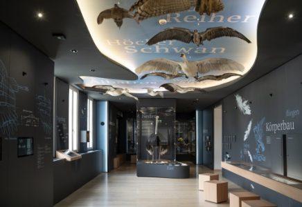 Blick in den Vogelsaal. Foto: Naturhistorisches Museum