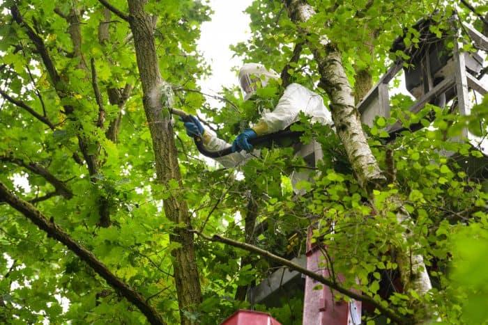 Der Mitarbeiter einer Spezialfirma saugt ein Eichenprozessionsspinner-Nest im Querumer Forst ab. Foto: SBK/Andreas Greiner-Napp