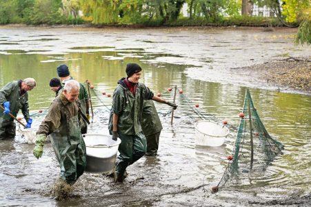 In Kübeln werden die gefangenen Fische zum Transporter getragen. Foto: SBK / Andreas Greiner-Napp