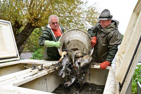 Auf dem Transporter werden die Fische in spezielle Behälter gekippt. Foto: SBK / Andreas Greiner-Napp
