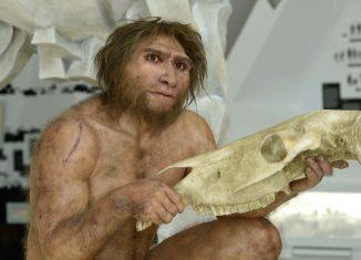 Figur des Homo heidelbergensis. Foto: Forschungsmuseum Schöningen