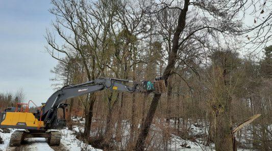 Laubbäume werden entfernt, damit die Tümpel besonnt werden. Foto: NABU