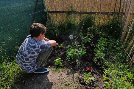 Jonas freut sich über die Pflanzen, die in seinem kleinen Beet wachsen. Foto: Rosemarie Garbe