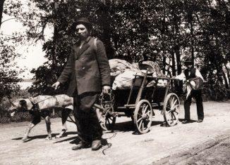"""Hausierer mit Hundegespann. Das Foto von Heinrich Zille trägt den Titel """"Ungewohnter Blick auf Gewohntes"""". Foto: gemeinfrei"""